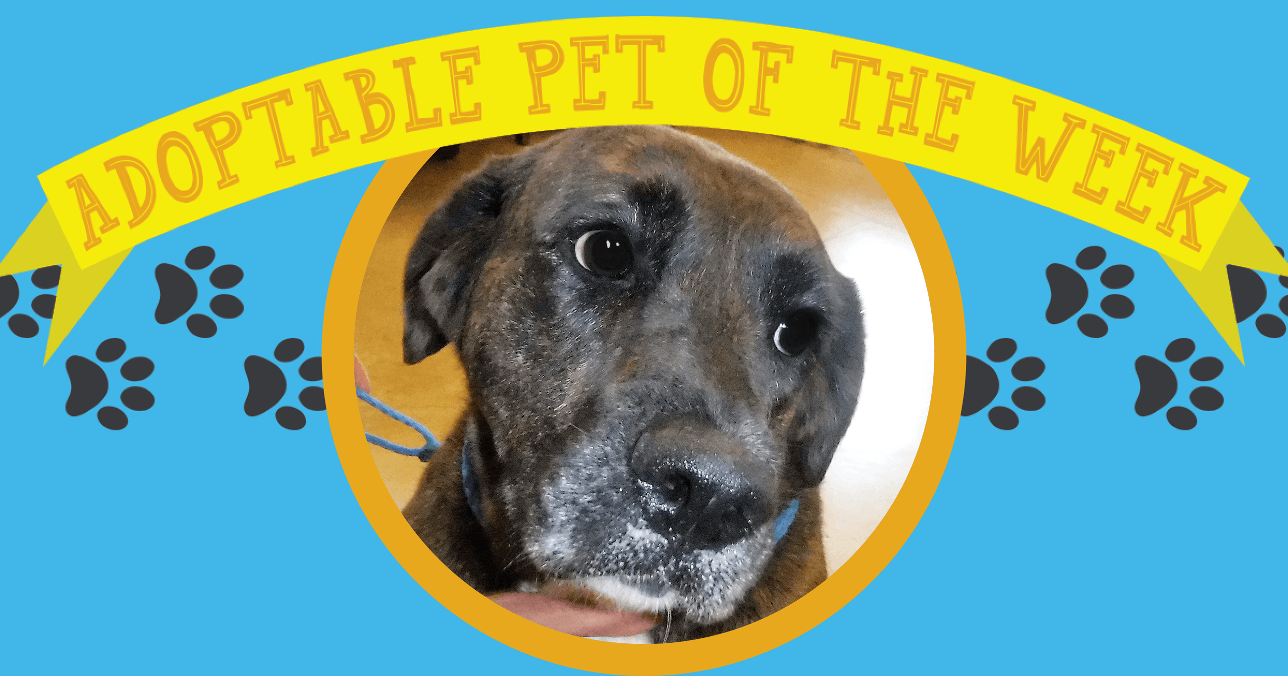 Adopt Of The Week (8-13-18)