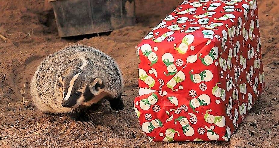 animal gift giving
